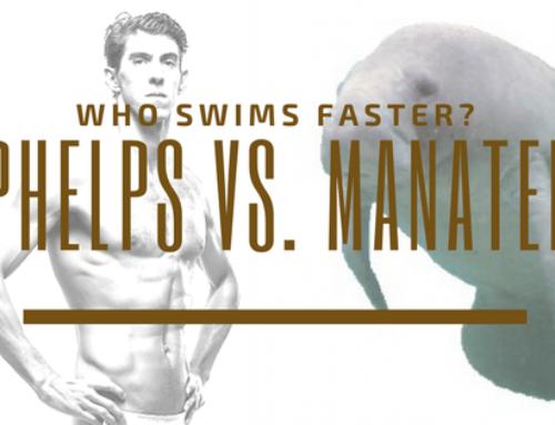 Phelps vs. Manatee